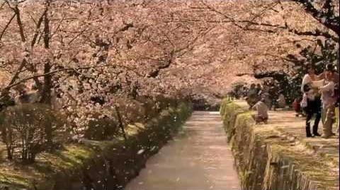 The Tsunami and the Cherry Blossom - Trailer - ACADEMY AWARD® NOMINATED- Documentary Short Subject