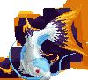 Ryukoi frost adult