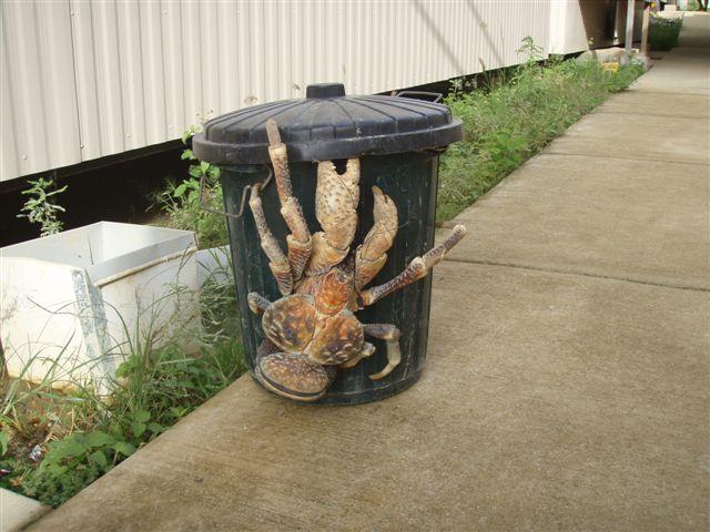 File:Crab1.jpg