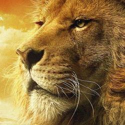 LionCanonsTaken