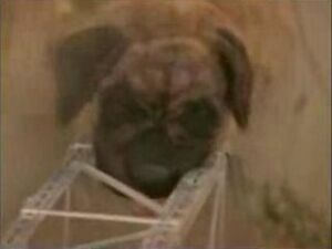 Big Dog From Sandlot
