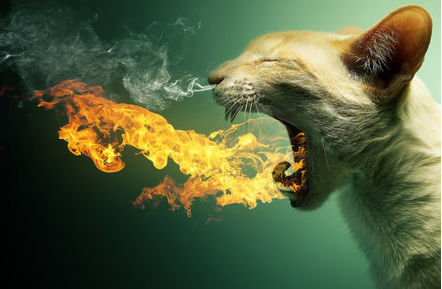 File:Kitty.fire.1.png