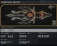 Knifehead Anatomy