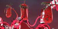 Venus Dragon Flytrap