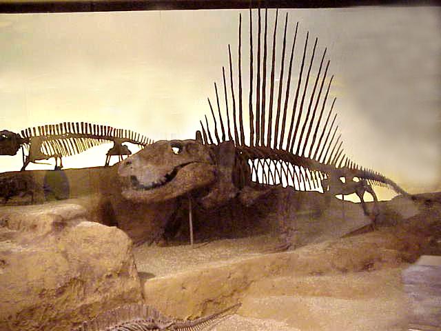 File:FieldMuseum2 Chicago.jpg