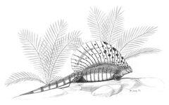 Edaphosaurus-cruciger jconway