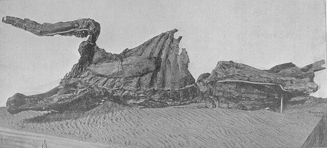 File:Edmontosaurusmummy.jpg