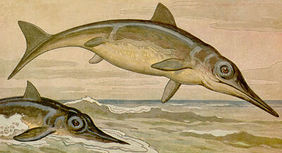Ichthyosaurus h harder