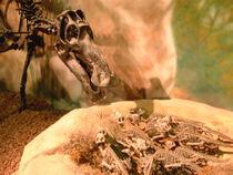 Mayasaurus