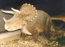 Triceratops brussels email
