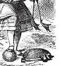 File:Hedgehogs.jpg
