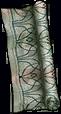 File:Tangled Drape.png