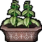 Potted Dryad