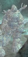 CoralSentinel1