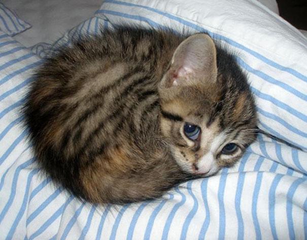 File:Belle - Adelaide de Grandin's Cat.jpg