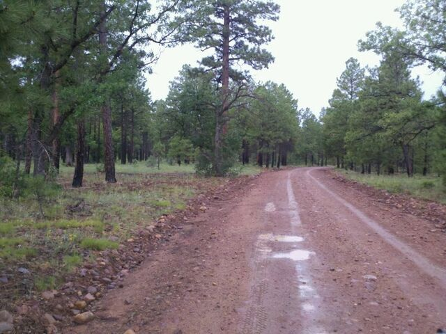 File:Sitgreaves National Forest.jpg