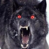 File:Image wolf.jpg