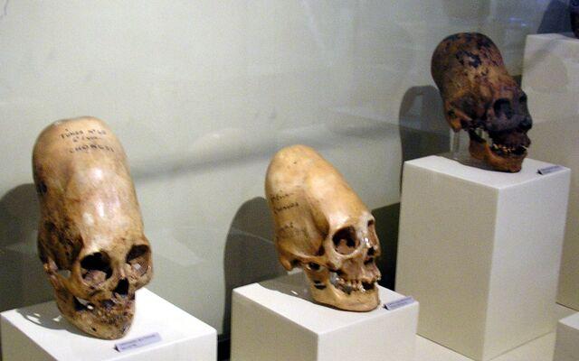 File:ParacasSkullsIcaMuseum.jpg