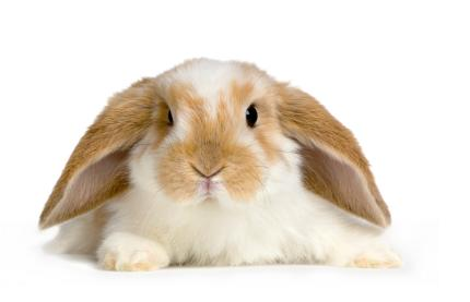 File:Bunny wabbit.JPG