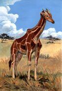 Giraffa jumae