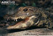Dwarf-crocodile