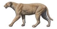Machairodus-catocopis-baja