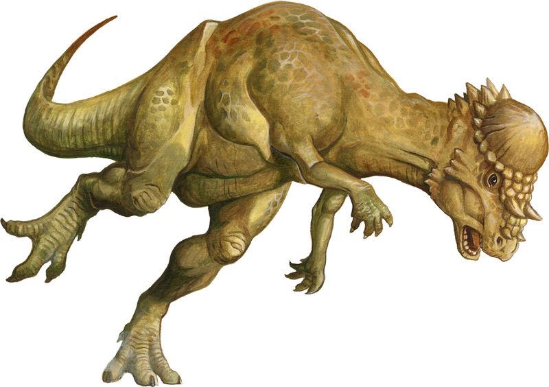 Pachycephalosaurus | The Parody Wiki | FANDOM powered by Wikia Pachycephalosaurus Head
