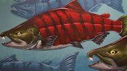 Sabertooth salmon