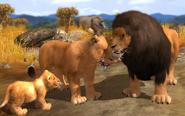 2528669-wildlife+park+3 lion family 01