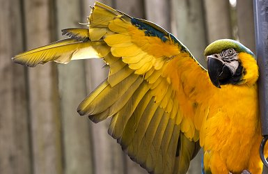 File:Parrot-clipped.jpg