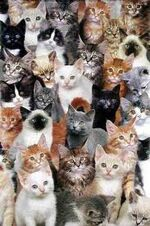 Groupofmanycats