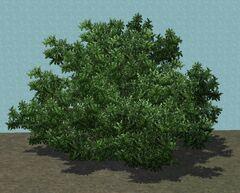 TreeShrub2