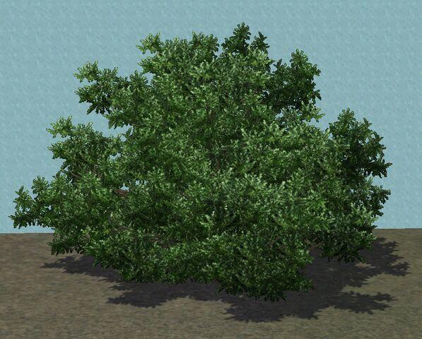 File:TreeShrub2.jpg
