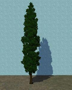 SmallCypress