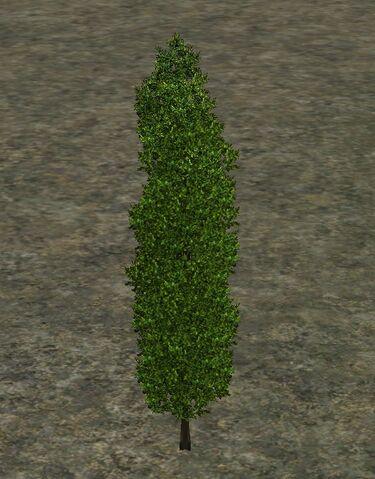 File:Evergreen.jpg