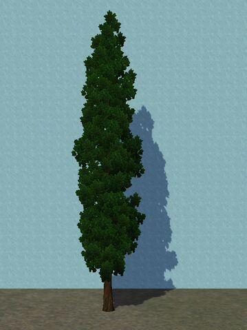 File:Cypress.jpg