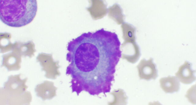 File:Cropped Flame cell.jpg