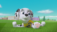 PAW Patrol Pups Save the Soccer Game Scene 3