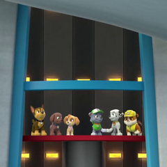 Rocky and Marshall bump their paws in elevator