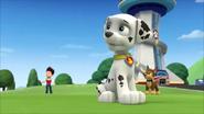 Pups get a rubble 10