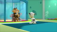 Pup Pup And Away 20