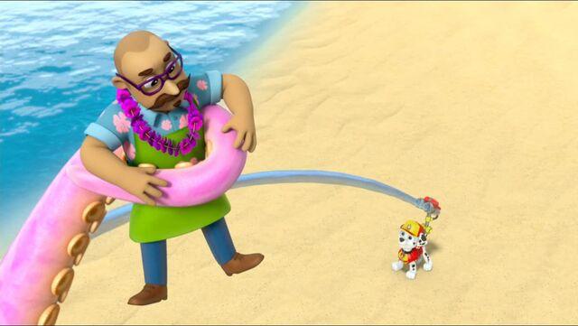 File:Baby Octopus 79.jpg