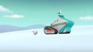 Seagull stowaway 3