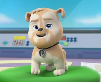 Pup version