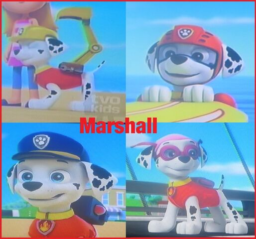 File:Marshall wearing the other pup s gear collage by codetski101-d8ih5al.jpg
