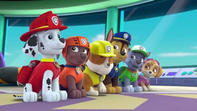 File:PAW Patrol Season 2 Episode 10 Pups Save a Talent Show - Pups Save the Corn Roast 417417.jpg
