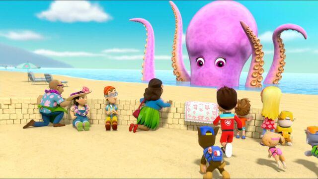 File:Baby Octopus 80.jpg