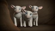 Sheep 47