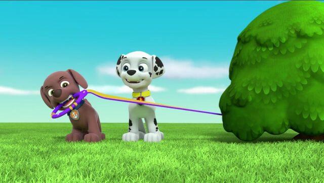 File:PAW Patrol Pups Save a Goldrush Scene 2.jpg
