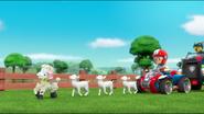 Sheep 52